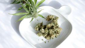 marijuana nuggets and plant on displayed